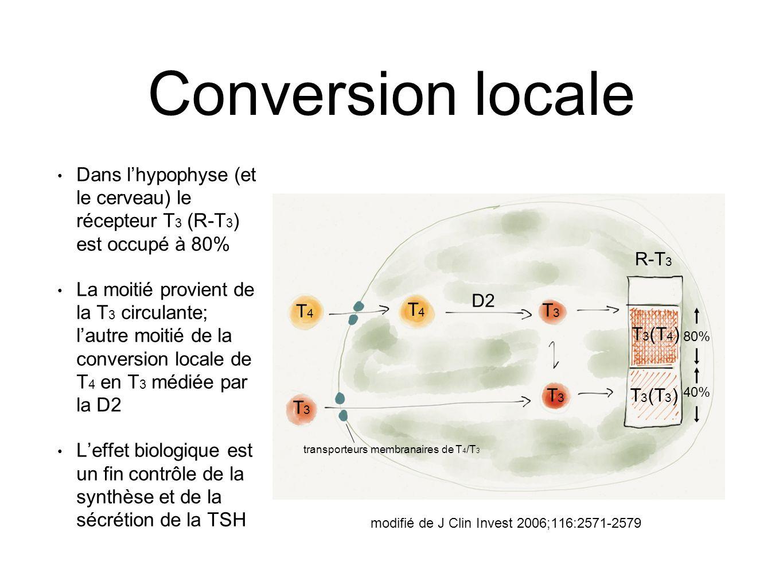 Conversion locale Dans l'hypophyse (et le cerveau) le récepteur T3 (R-T3) est occupé à 80%