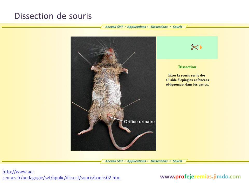 Dissection de souris www.profejeremias.jimdo.com