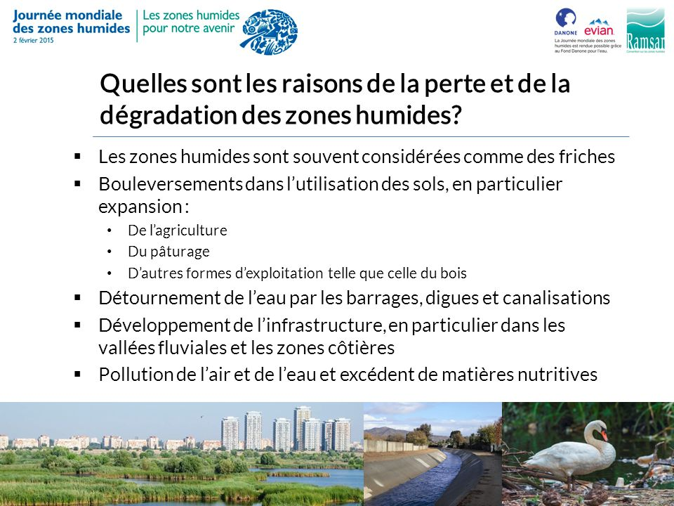 Quelles sont les raisons de la perte et de la dégradation des zones humides