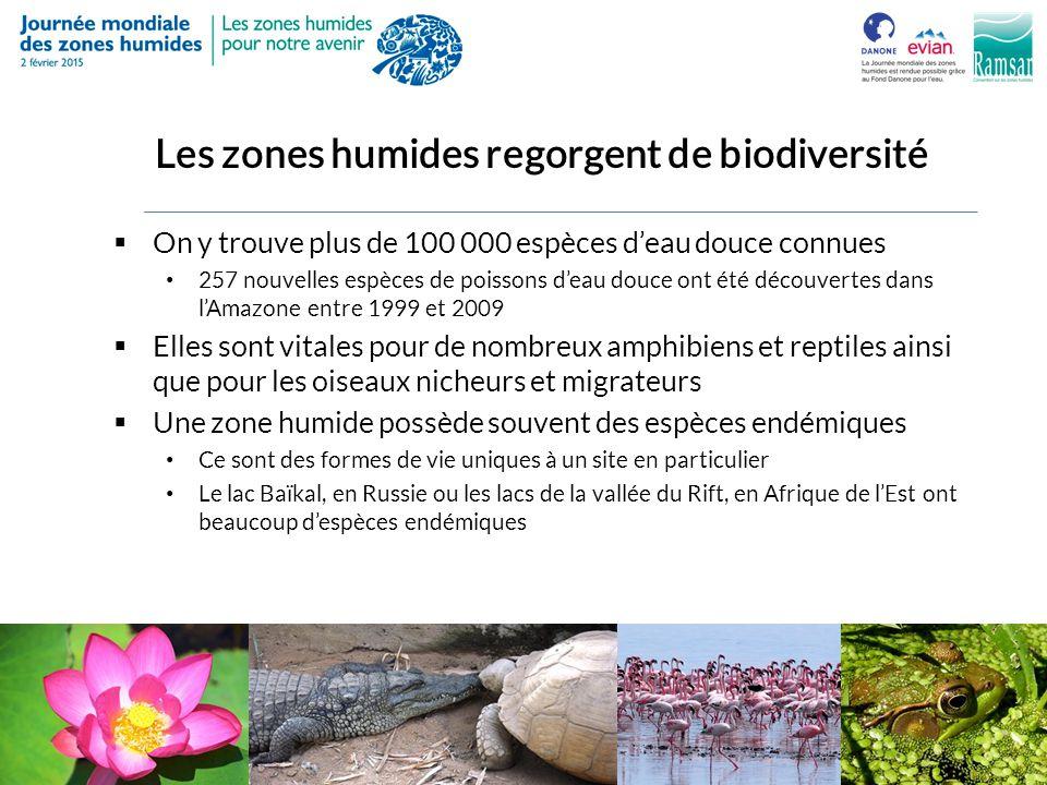 Les zones humides regorgent de biodiversité