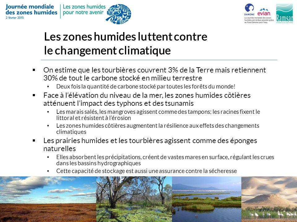 Les zones humides luttent contre le changement climatique