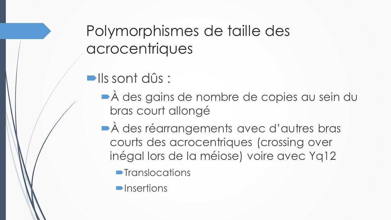 Polymorphismes de taille des acrocentriques