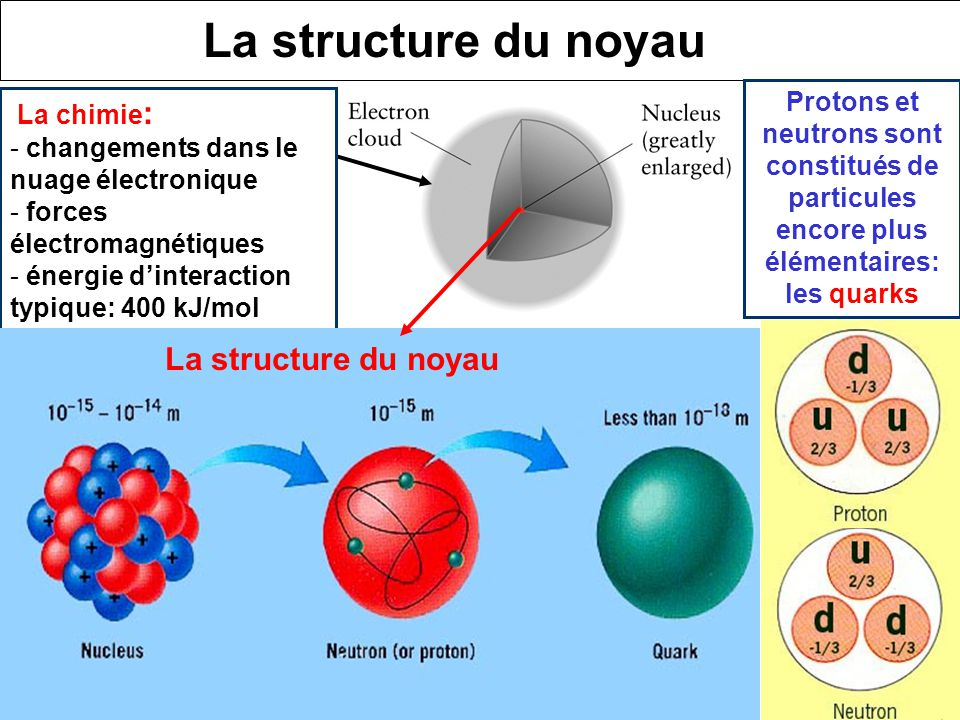 La structure du noyau La structure du noyau