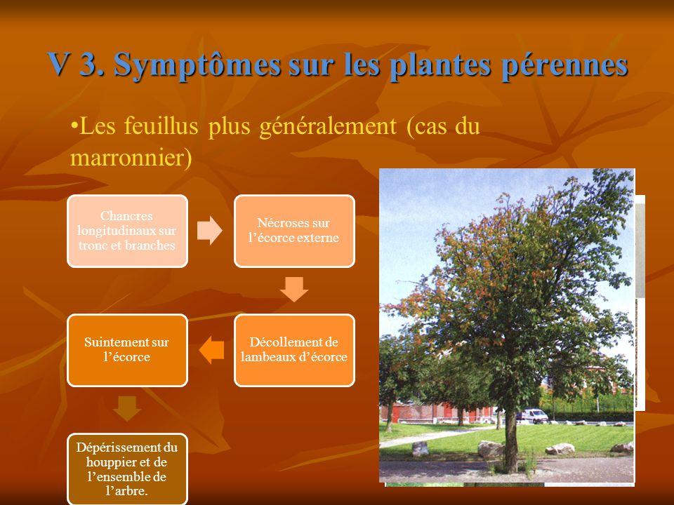 V 3. Symptômes sur les plantes pérennes