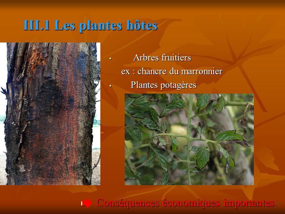 III.1 Les plantes hôtes Conséquences économiques importantes