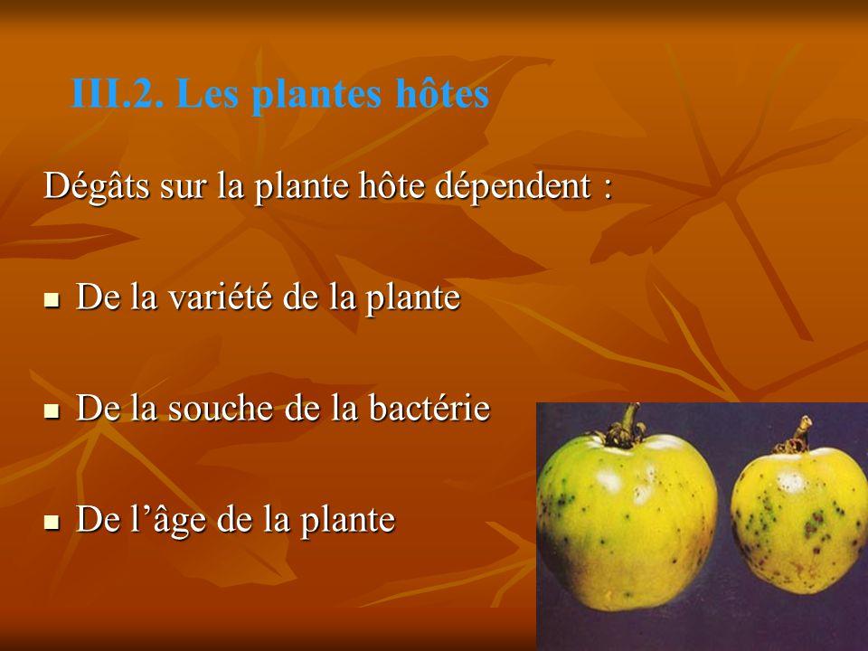 III.2. Les plantes hôtes Dégâts sur la plante hôte dépendent :