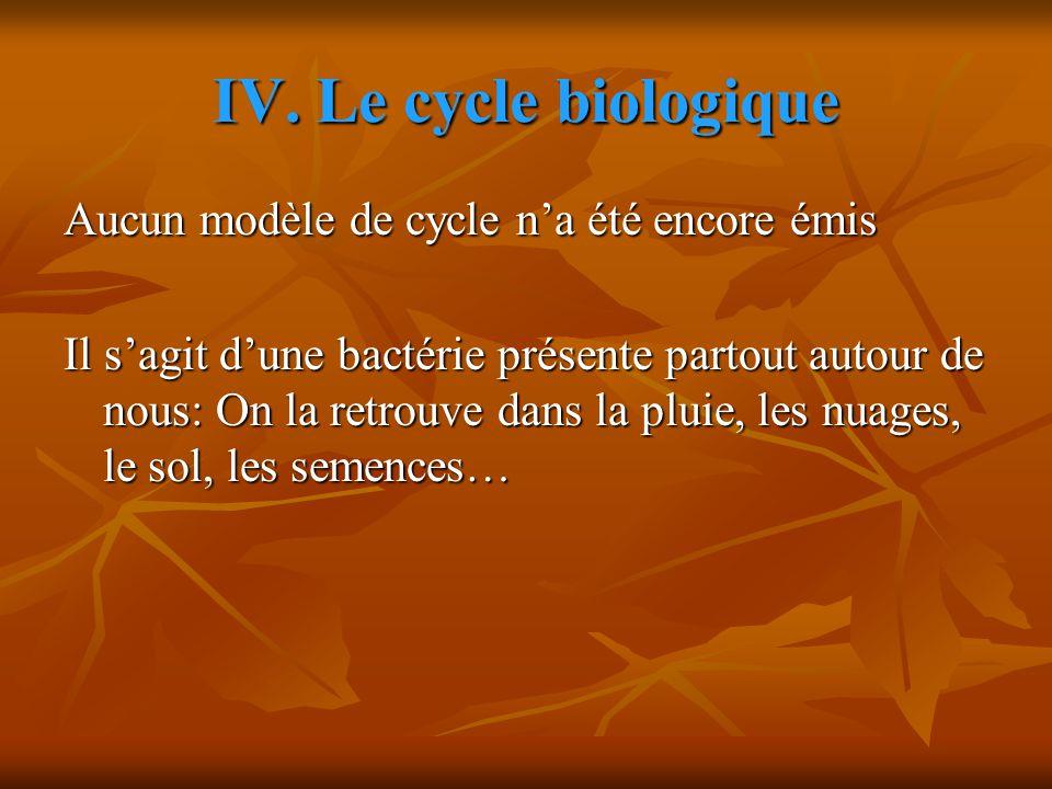IV. Le cycle biologique Aucun modèle de cycle n'a été encore émis