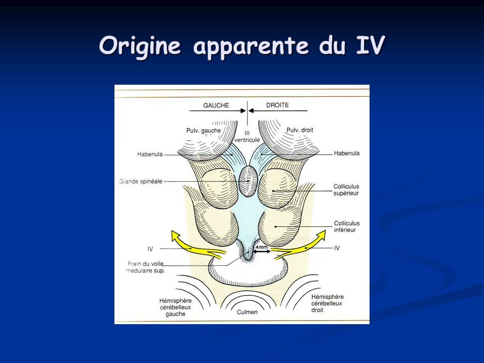 Origine apparente du IV