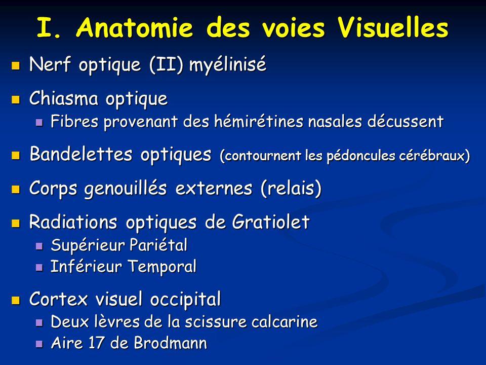 I. Anatomie des voies Visuelles