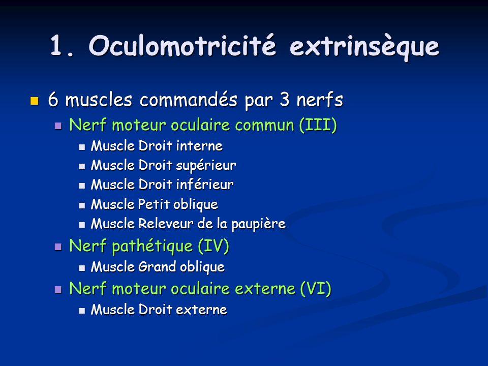 1. Oculomotricité extrinsèque