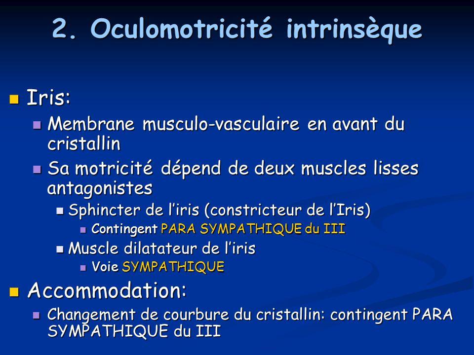 2. Oculomotricité intrinsèque