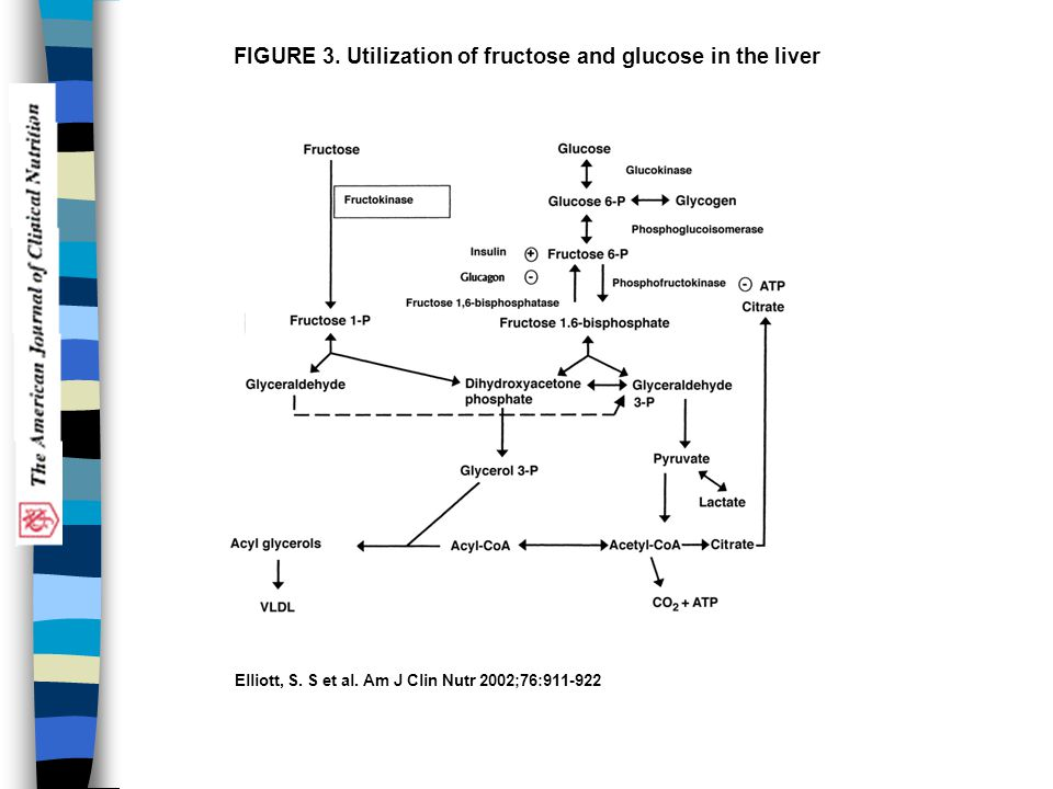FIGURE 3. Utilization of fructose and glucose in the liver