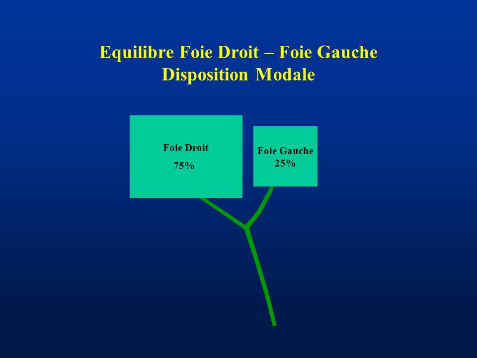 Equilibre Foie Droit – Foie Gauche Disposition Modale