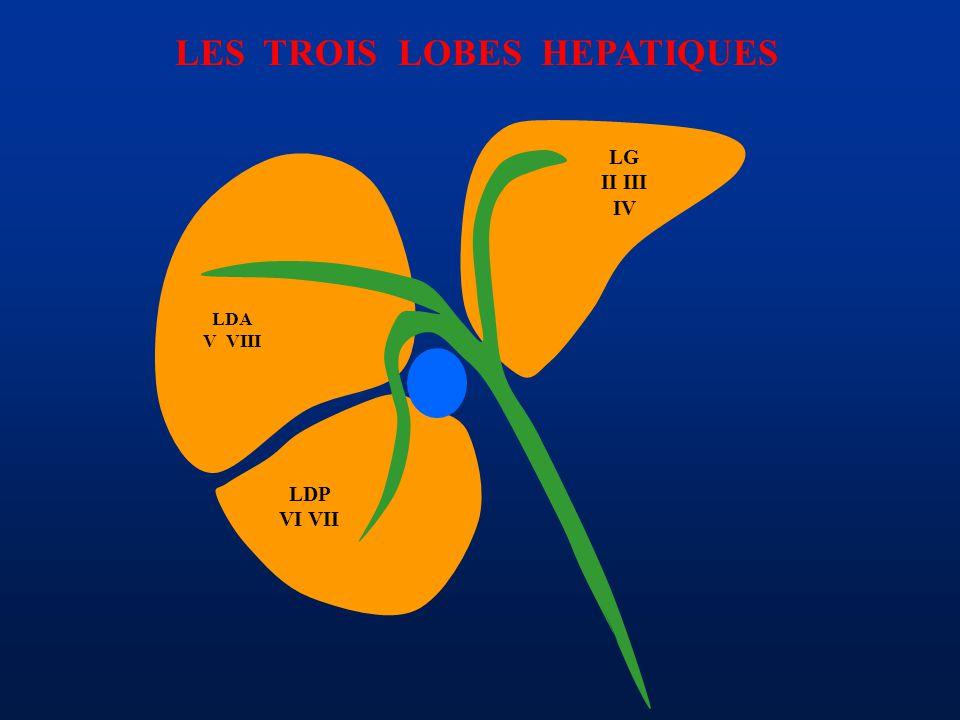 LES TROIS LOBES HEPATIQUES