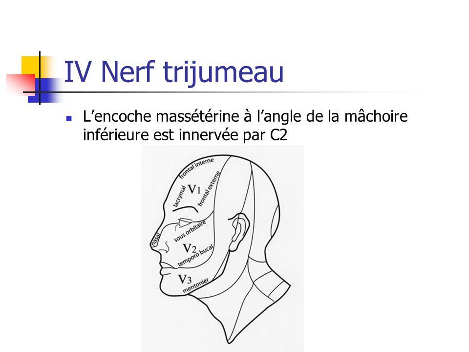 IV Nerf trijumeau L'encoche massétérine à l'angle de la mâchoire inférieure est innervée par C2
