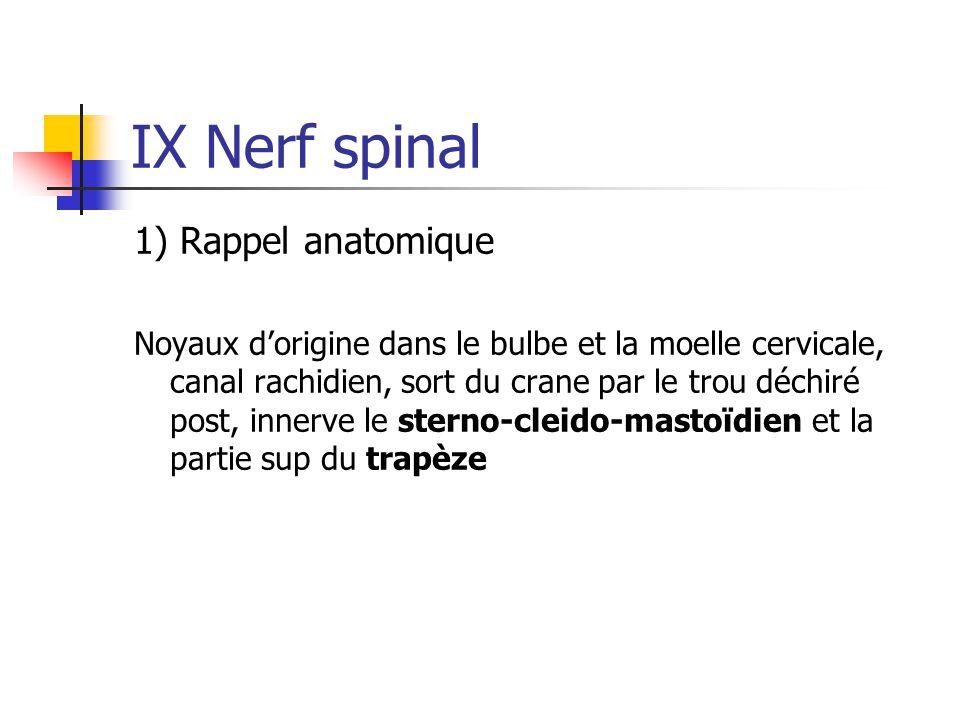 IX Nerf spinal 1) Rappel anatomique