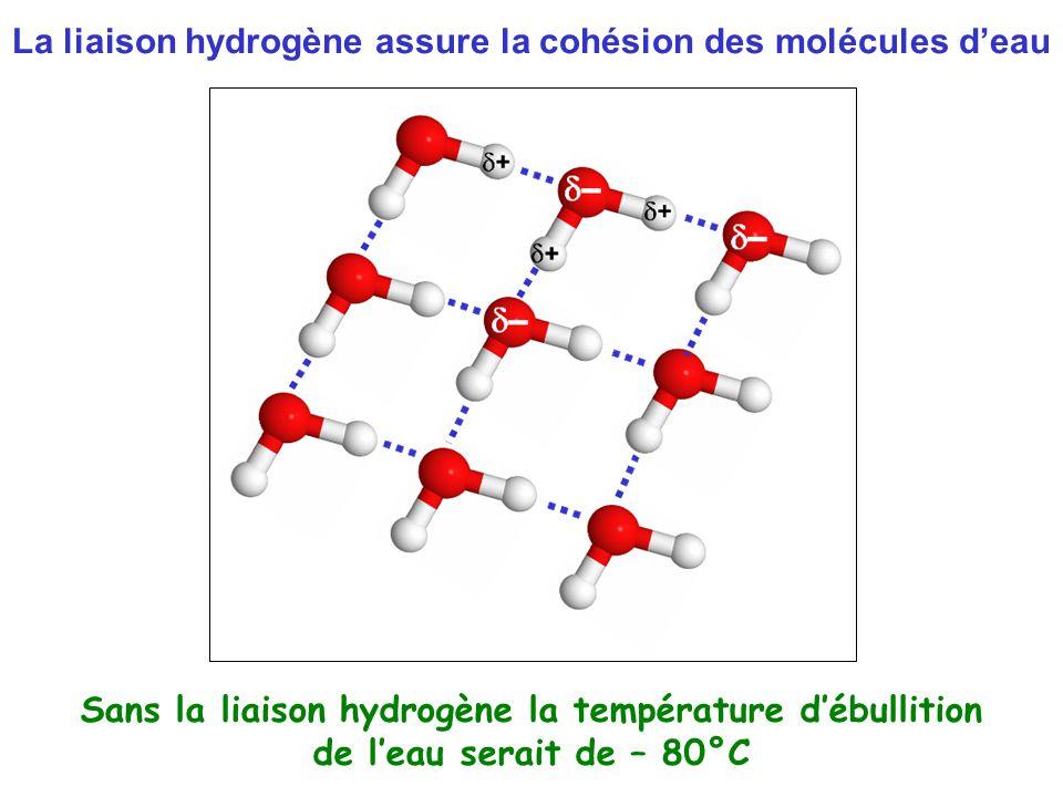La liaison hydrogène assure la cohésion des molécules d'eau