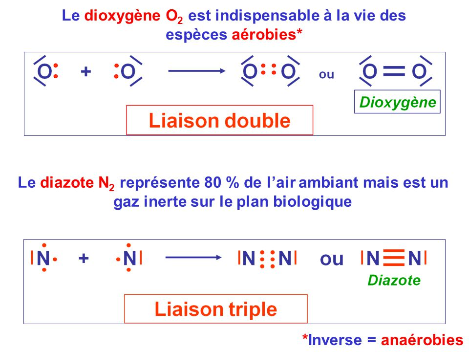 Le dioxygène O2 est indispensable à la vie des espèces aérobies*