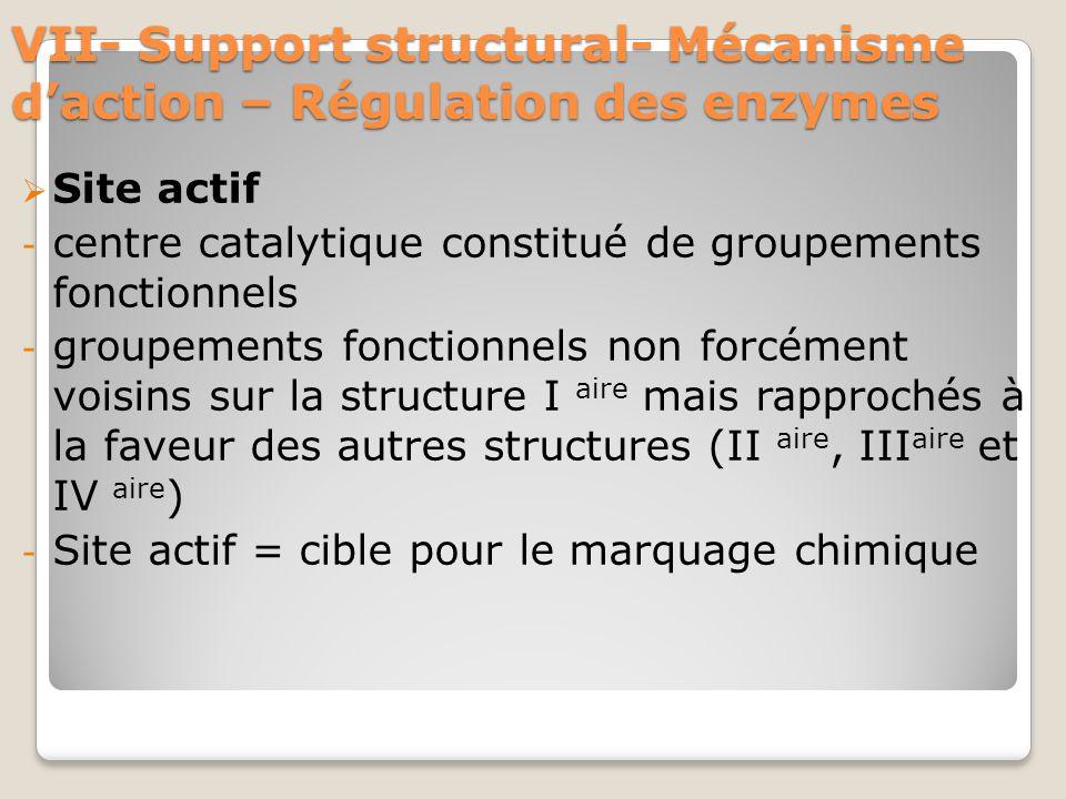 VII- Support structural- Mécanisme d'action – Régulation des enzymes