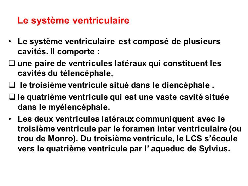 Le système ventriculaire