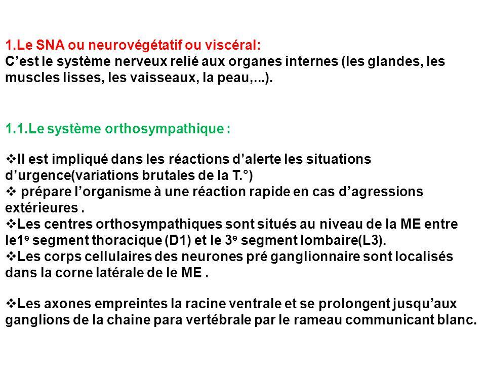 1.Le SNA ou neurovégétatif ou viscéral:
