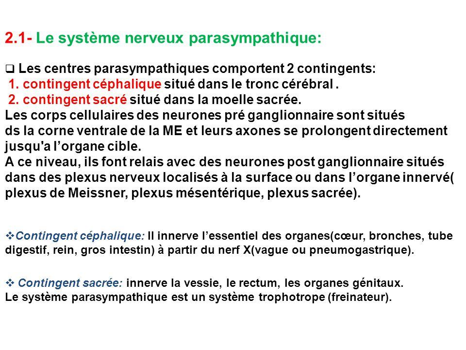 2.1- Le système nerveux parasympathique: