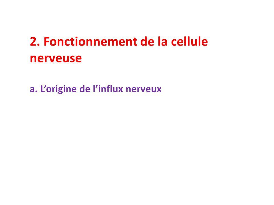 2. Fonctionnement de la cellule nerveuse