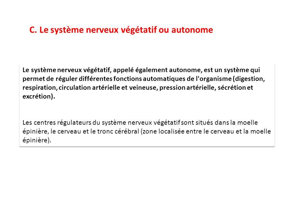 C. Le système nerveux végétatif ou autonome