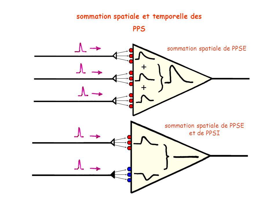 sommation spatiale et temporelle des PPS