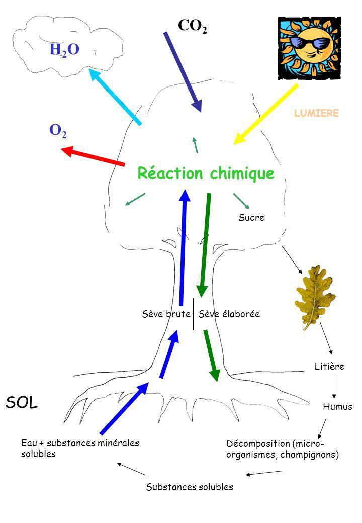 CO2 H2O O2 Réaction chimique SOL LUMIERE Sucre Sève brute