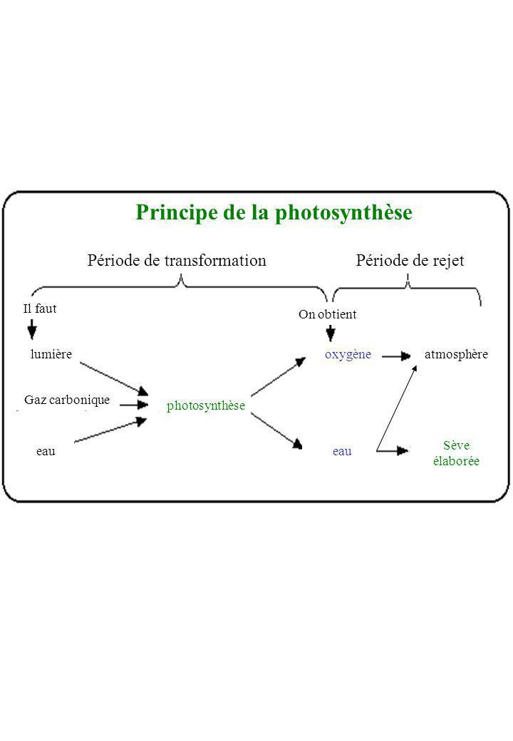 Principe de la photosynthèse