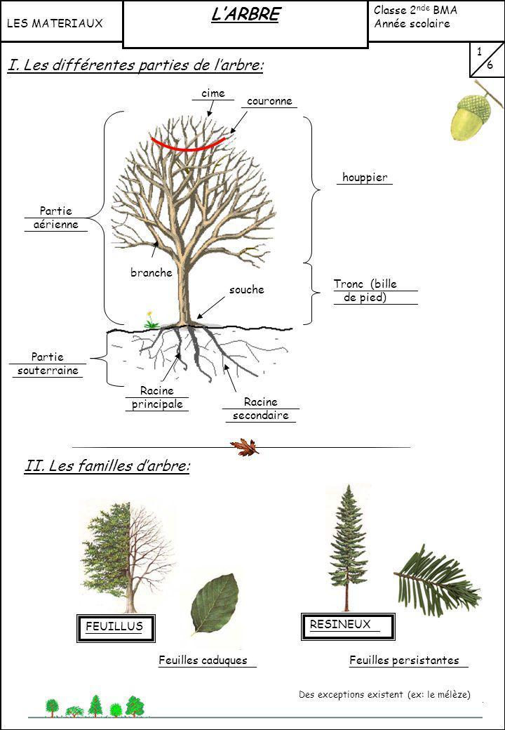 L'ARBRE I. Les différentes parties de l'arbre: