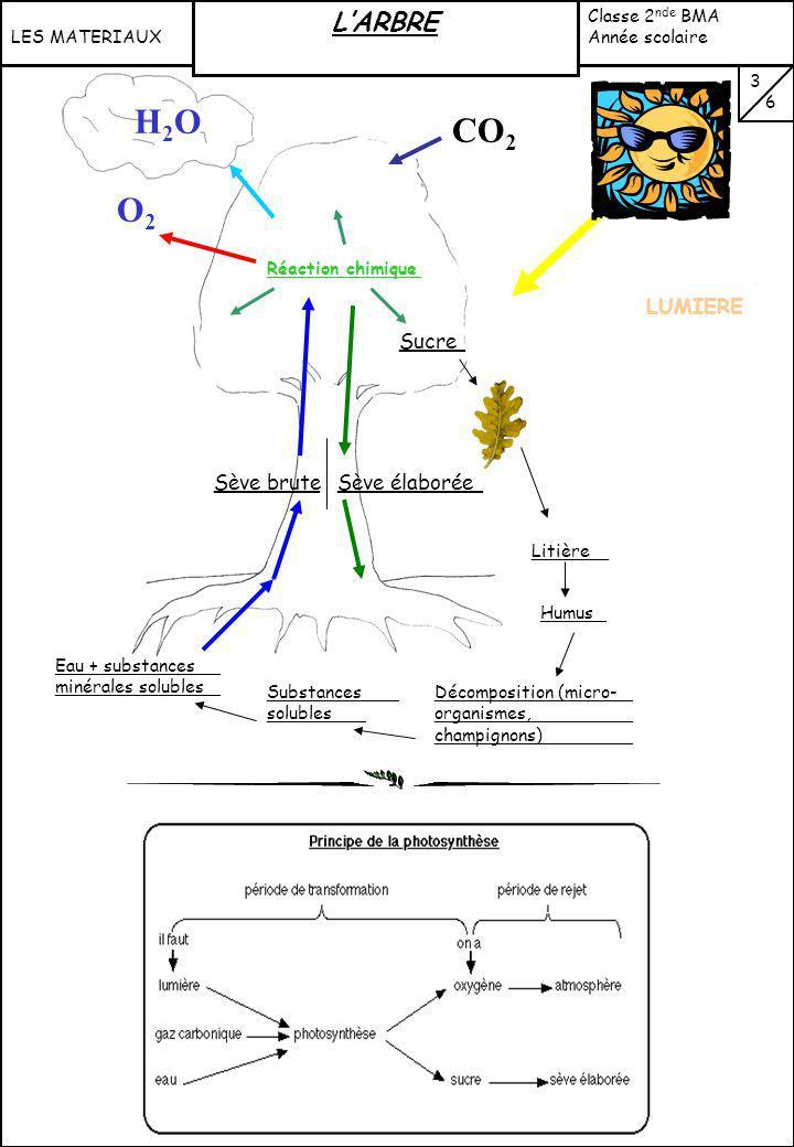 H2O CO2 O2 L'ARBRE VI: FONCTION CHLOROPHYLLIENNE (suite) : LUMIERE