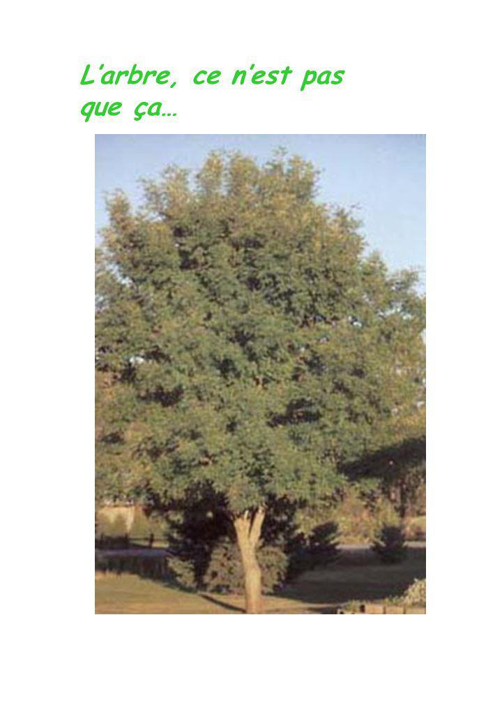 L'arbre, ce n'est pas que ça…