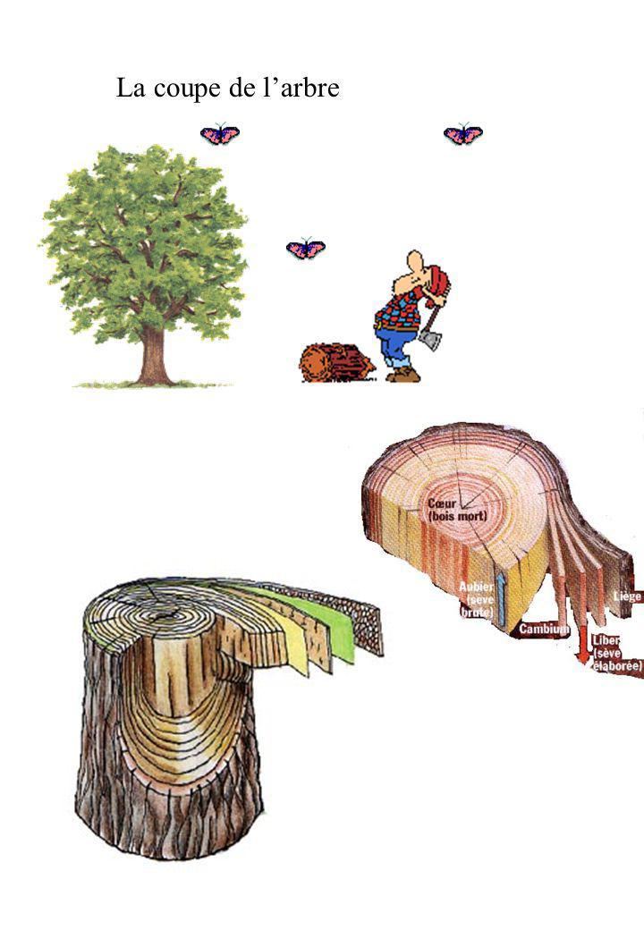 La coupe de l'arbre