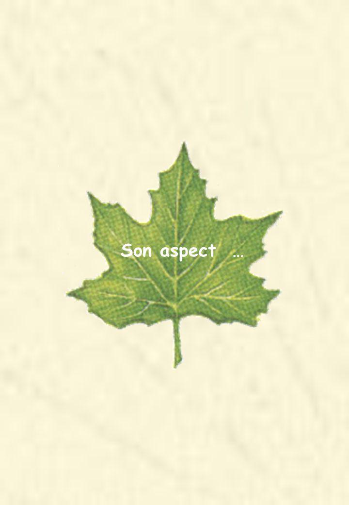 Son aspect …