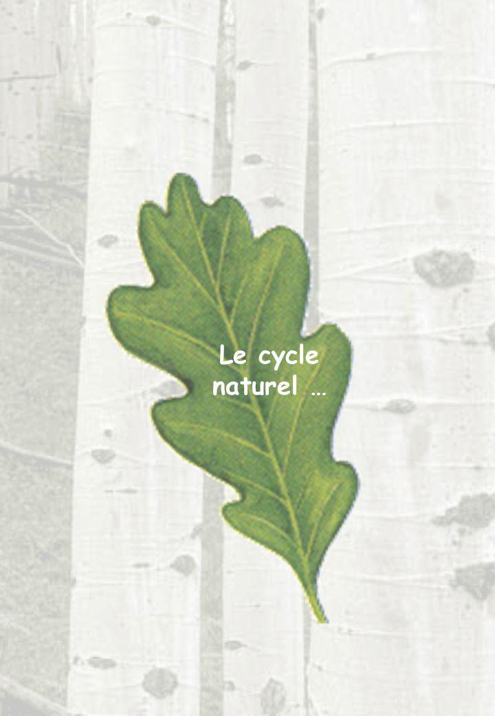 Le cycle naturel …