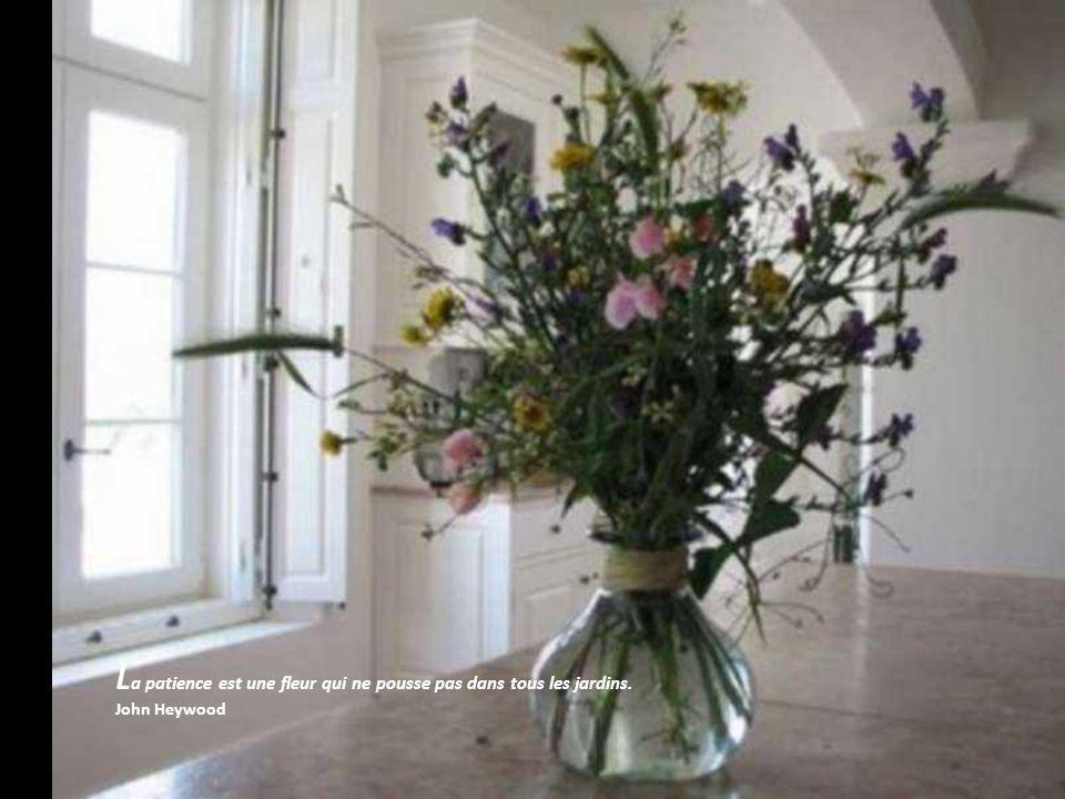 La patience est une fleur qui ne pousse pas dans tous les jardins