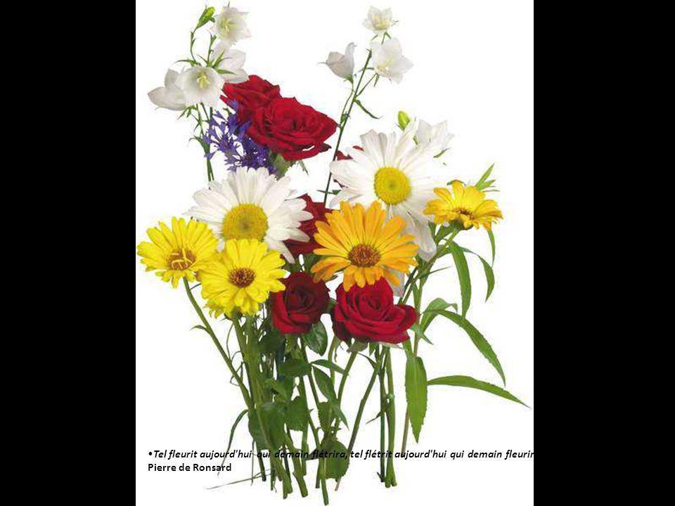 bouquets de fleurs diaporama de gi ppt video online. Black Bedroom Furniture Sets. Home Design Ideas