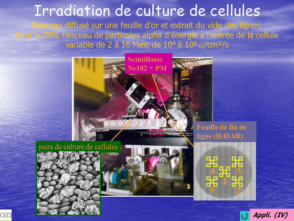Irradiation de culture de cellules