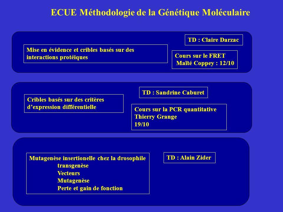 ECUE Méthodologie de la Génétique Moléculaire