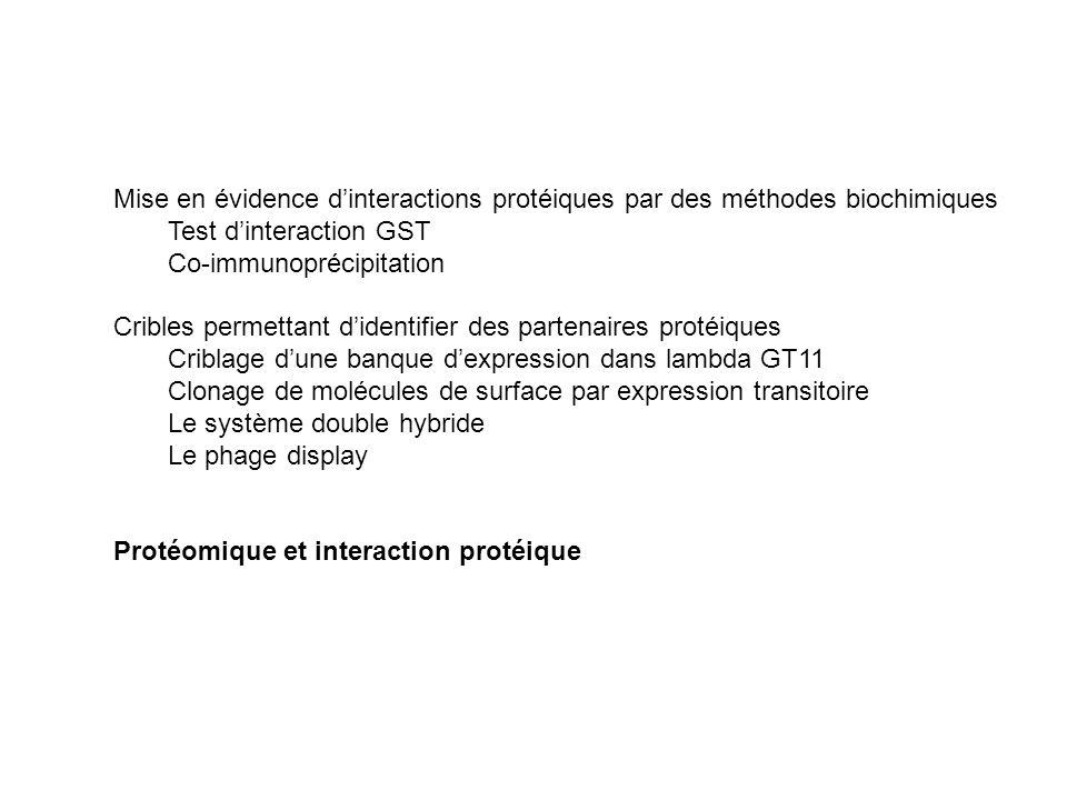 Mise en évidence d'interactions protéiques par des méthodes biochimiques