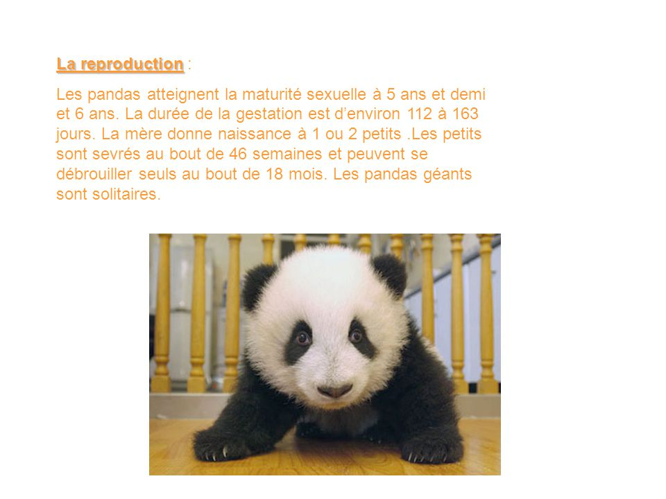 La reproduction :