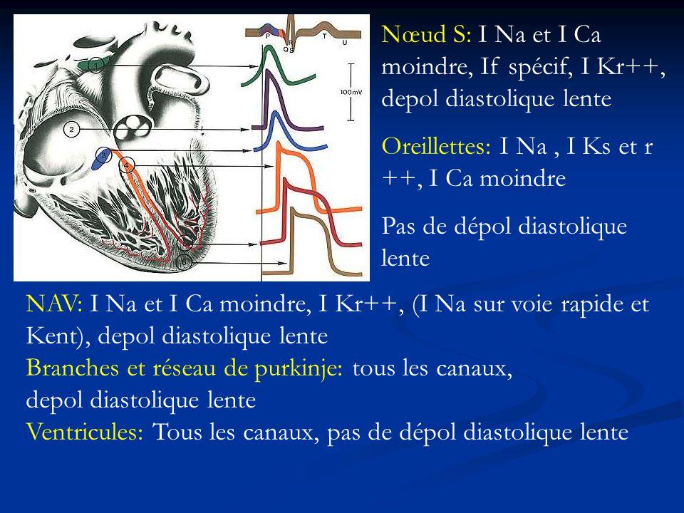 Nœud S: I Na et I Ca moindre, If spécif, I Kr++, depol diastolique lente