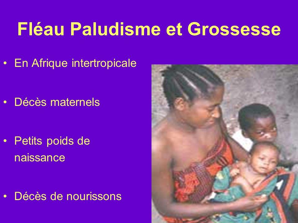 Fléau Paludisme et Grossesse