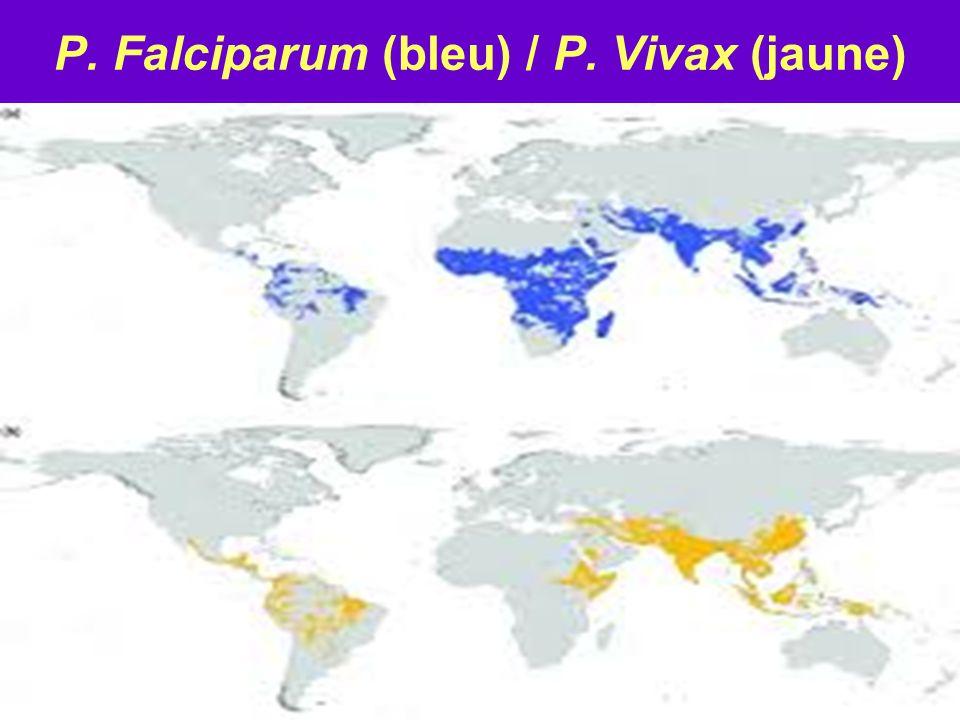 P. Falciparum (bleu) / P. Vivax (jaune)