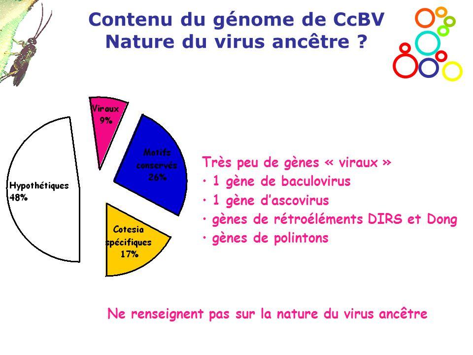 Contenu du génome de CcBV Nature du virus ancêtre