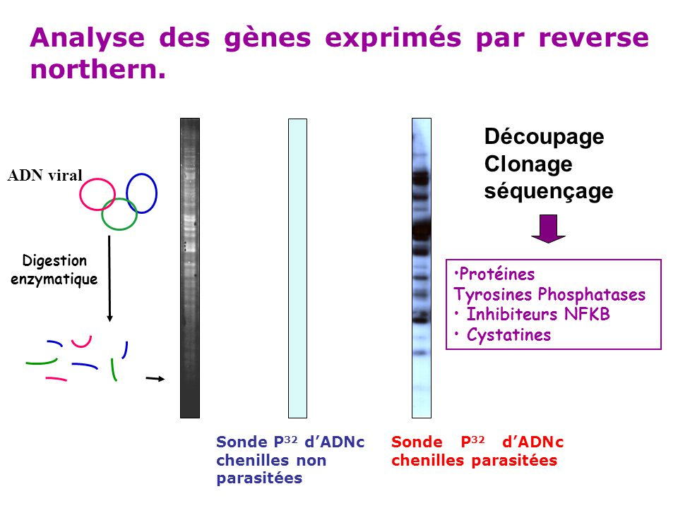 Digestion enzymatique