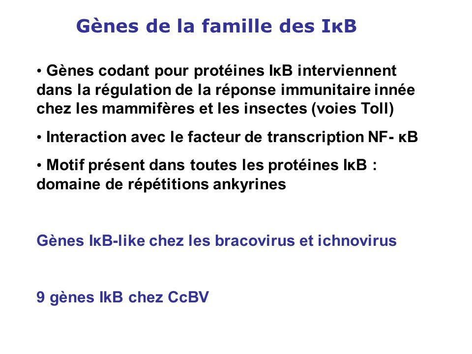 Gènes de la famille des IκB