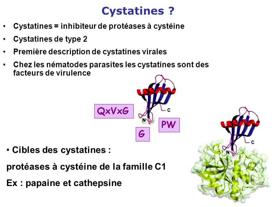 Cystatines QxVxG PW G Cibles des cystatines :